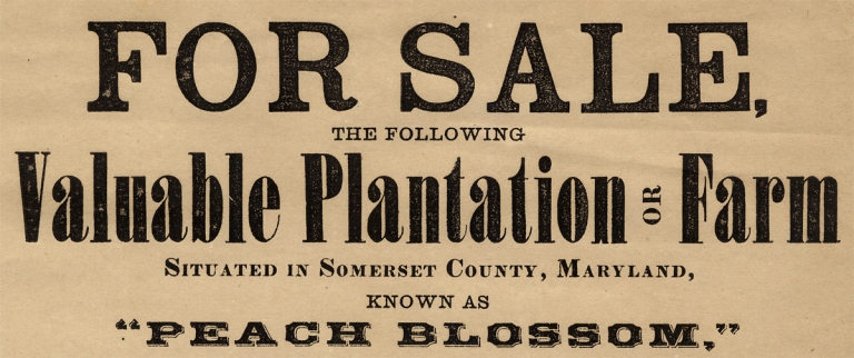 For Sale, The Following Valuable Plantation or Farm Situated in Somerset County, Maryland…. Samuel, i. e. Samuel Townsend Richard Townsend, Richard Townsend, 1812–1881, 1839–?