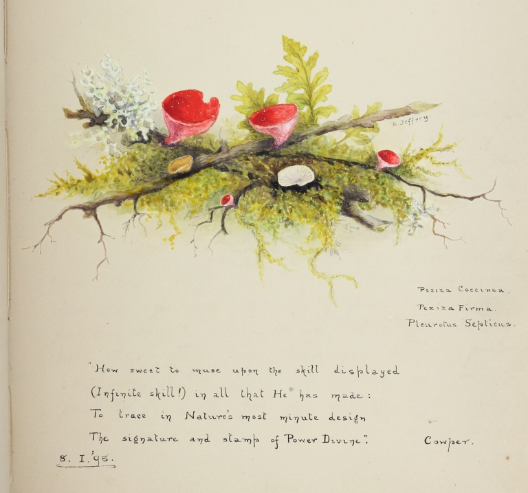 [1897–1898 Extensively Illustrated Album kept by Florence Mary Fardon]. Florence Mary Fardon.