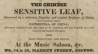 The Chinese Sensitive Leaf, Discovered by a celebrated Physician and eminent Professor of Botany...