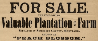 For Sale, The Following Valuable Plantation or Farm Situated in Somerset County, Maryland…